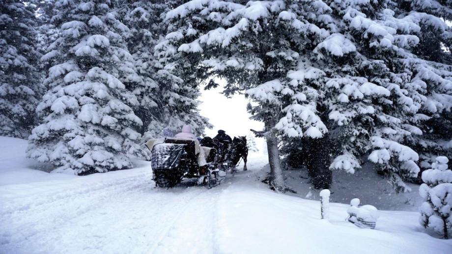 Kutsche in verschneitem Winterwald in Lech am Arlberg.